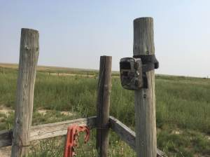 Trail Camera Over Water Tank