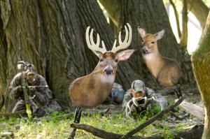 Buck and Doe Decoy