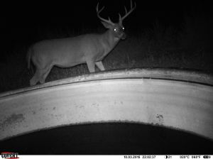 Nine Point Buck Trail Camera