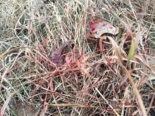 Rage Broadhead Blood Trail