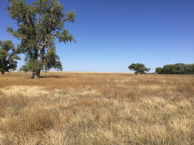 Western Kansas Open Prairie