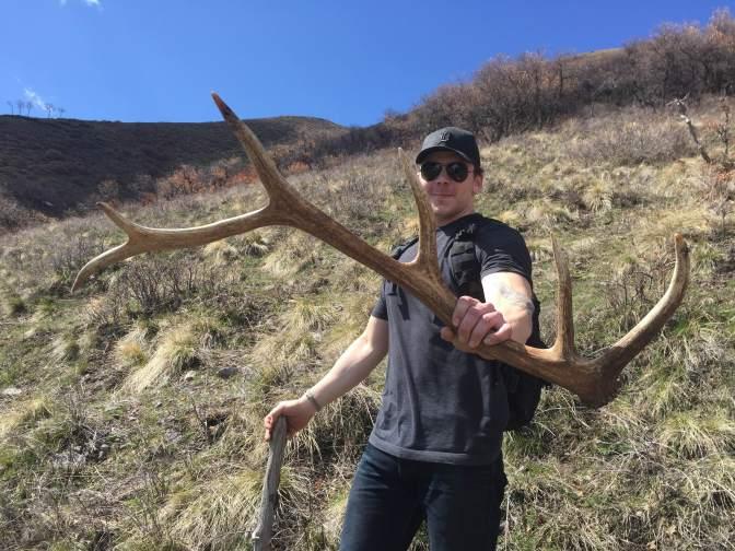 Shed Hunting For Elk Antlers