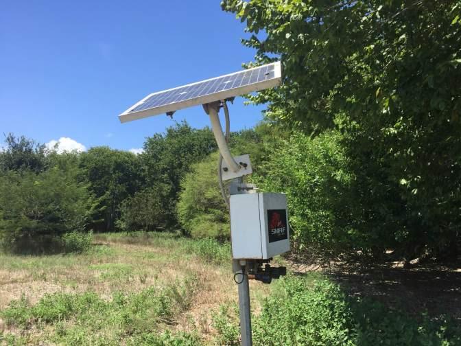 Solar Hog Feeder Light
