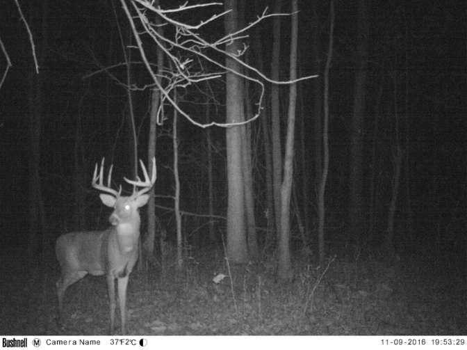 Big Michigan Buck