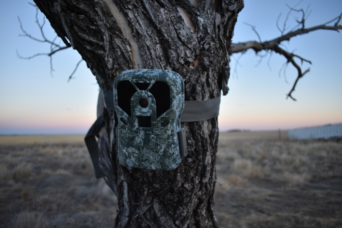 Best Trail Camera For Deer Hunting