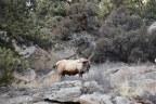 Planning and Preparing for a DIY, OTC Archery Elk Hunt in Colorado