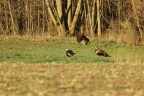 A Mediocre Hunter Attempts to Take a Turkey